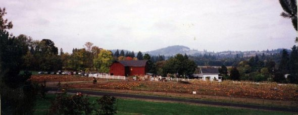A photo of my grandparent's farm in West Linn, OR, during the pumpkin patch.